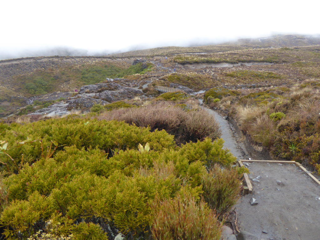 Tag 22 - Tongariro Nationalpark
