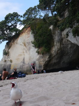 Coromandel Halbinsel Cathedral Cove